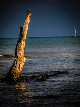 Took this of a Sailboat in the distance of a dead tree just off the beach.