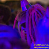 Tatanka Music Festival 2008 1399