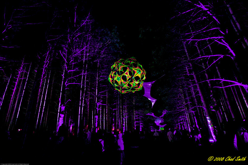 The Forest @ night -  Rothbury