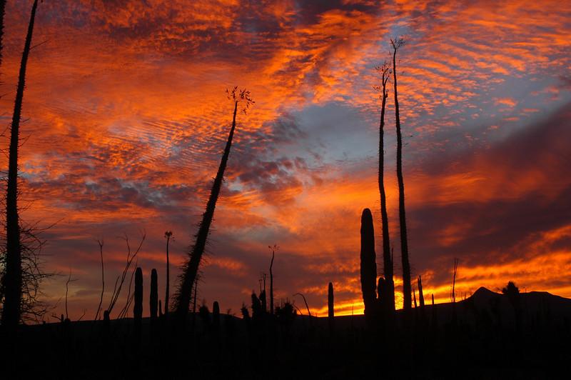 desert sunset close to Catavina