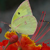 Do butterflies smile? Look closely!<br /> NO Photoshop involved - this image is unedited.