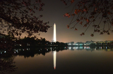 Washington Monument beyond the Capital Basin, through the Cherry Trees. March 2012