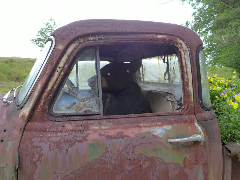 Mr. Bear at the Wheel