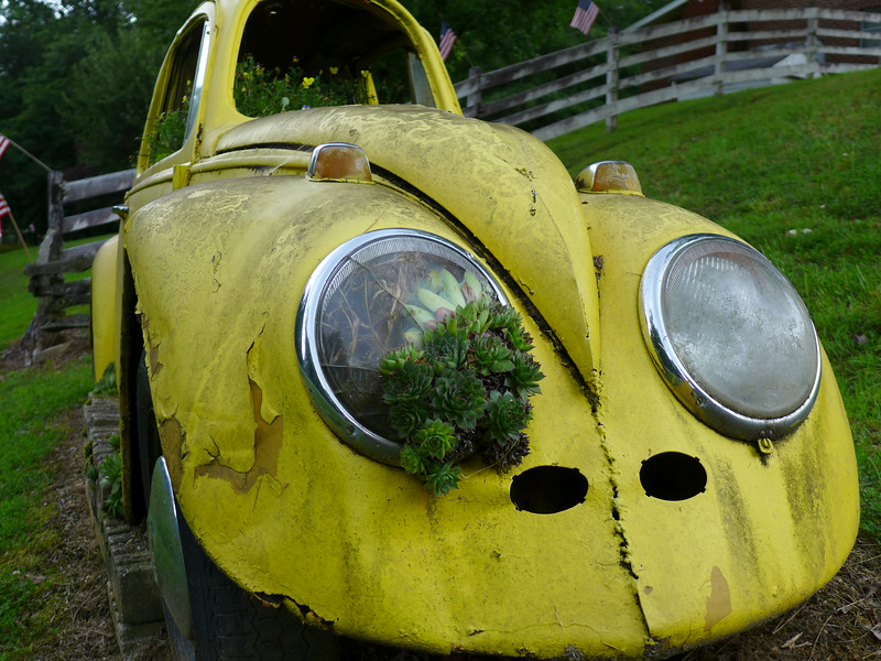 Notice the plants and roots INSIDE the headlight!!