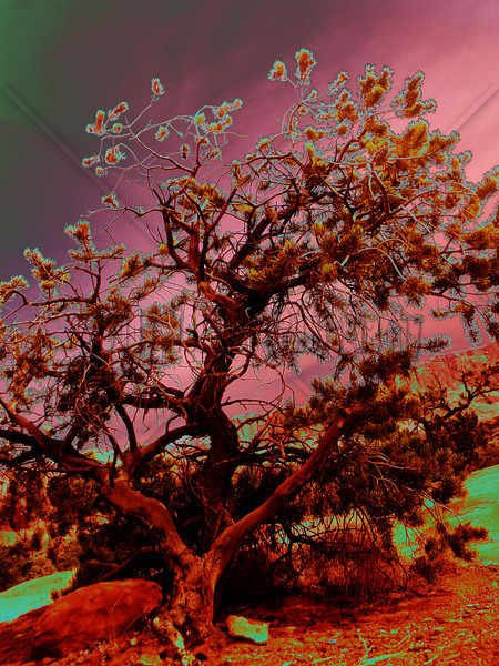 Red Tree - Altered
