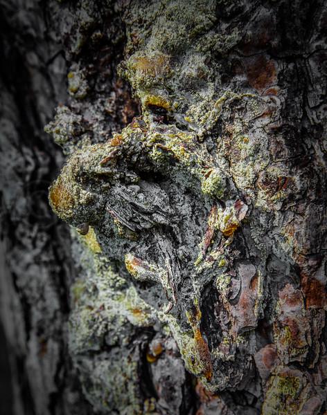 Pine sap ghoul