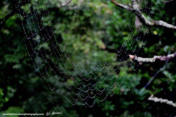 amazing spider webs