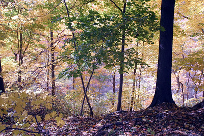 Fall Scene - Single Tree Western Pennsylvania, USA