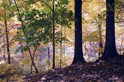 Fall Scene Pennsylvania, USA