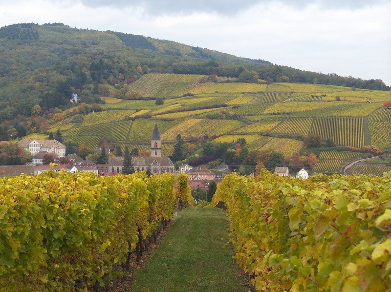 Autumn colors in the vineyards are special.