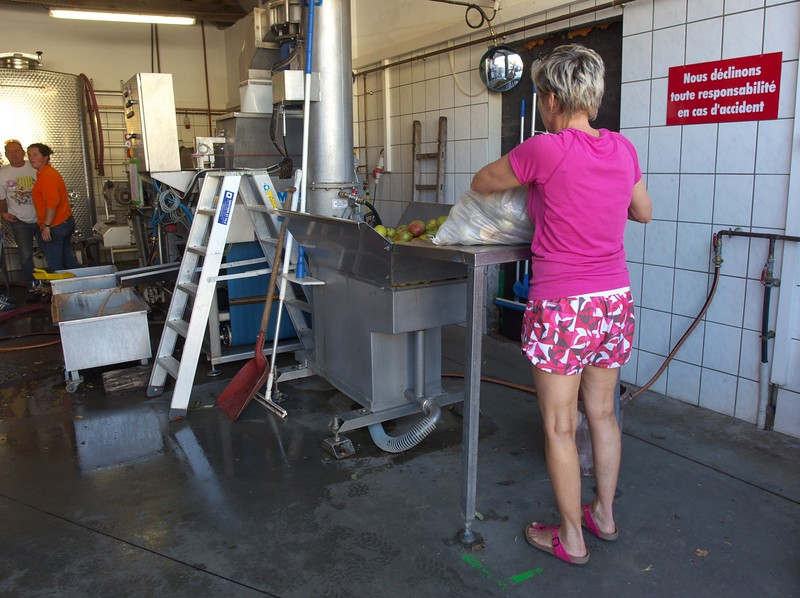 Apples are taken to a local press where they are washed, pressed and the juice is flash pasteurized and bottled.  Forty gallons of juice took thirty minutes.