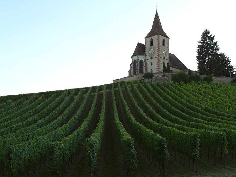 There are plenty of churches, but the dominant religion is of wine.