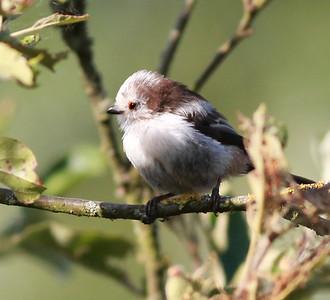 Mystery Bird  Amsterdam 2014 06 25-3.JPG