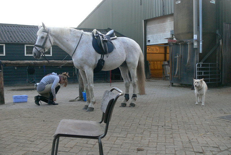 going to clara's riding stable this evening for training.
