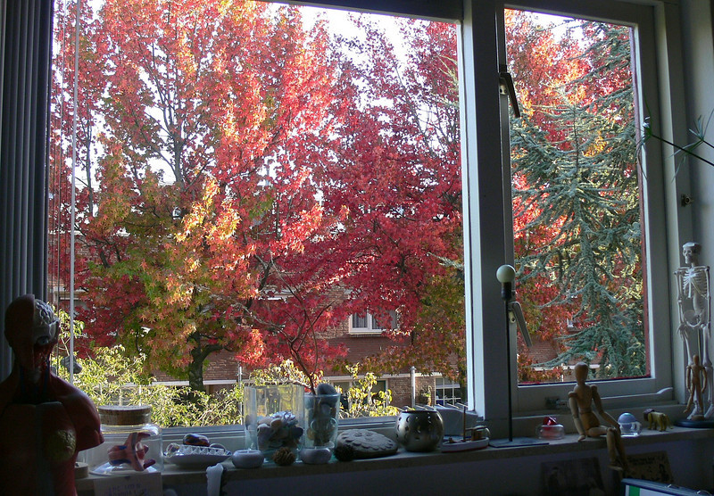 view from clara's window