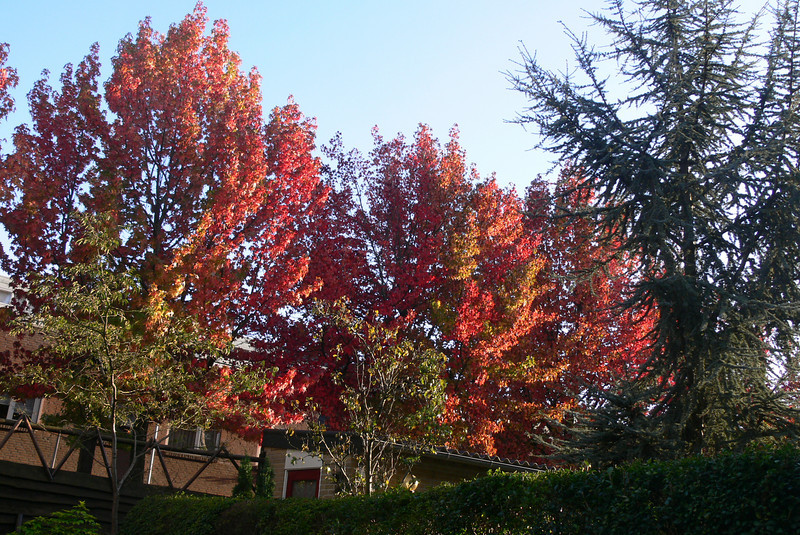 colorful trees around the house
