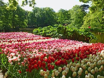 Amsterdam Keukenhof Gardens 2015  24
