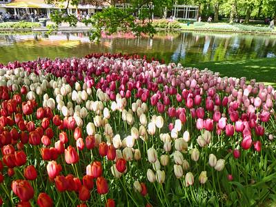 Amsterdam Keukenhof Gardens 2015  23