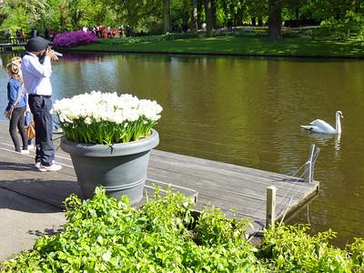 Amsterdam Keukenhof Gardens 2015  20