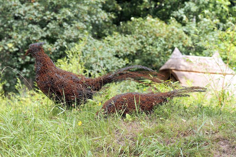 Wire netting pheasants.