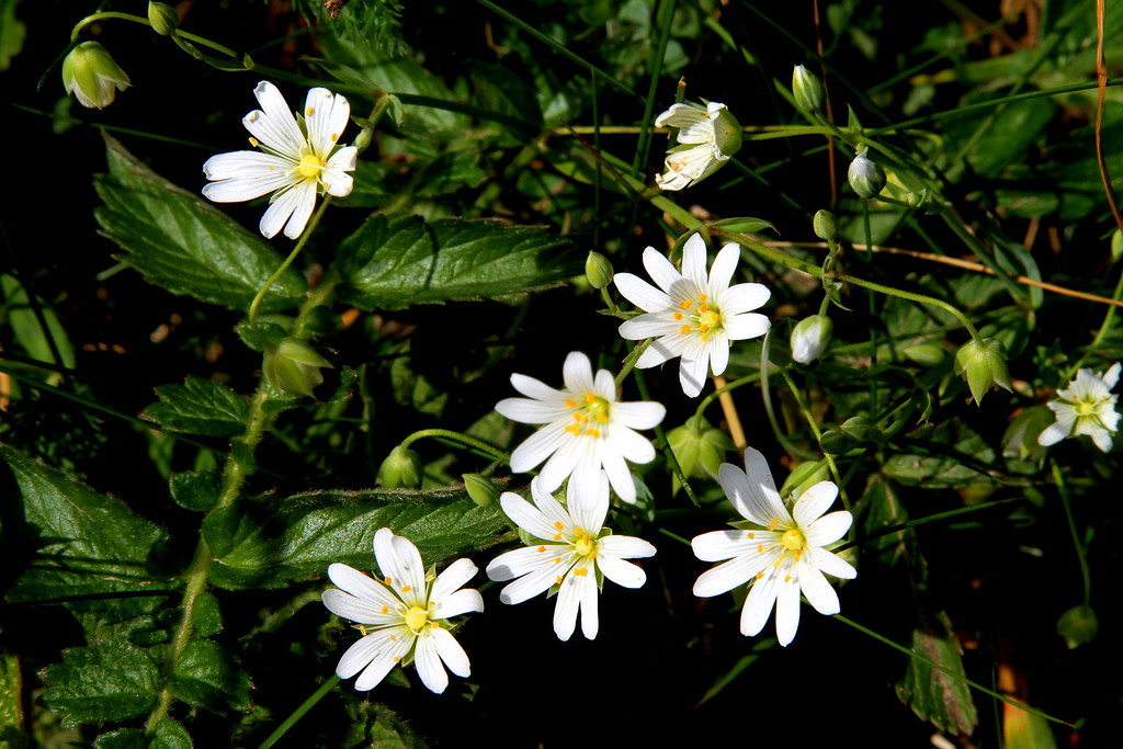 Little pretty white flowers