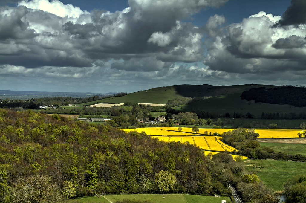 More 'spotlit' oil-seed rape with Hod Hill, ironage hillfort/Roman camp, behind