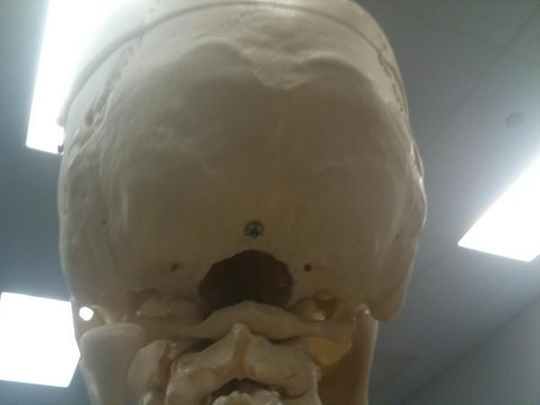 AnatandPhys Bones Fischer Williams Photo0074