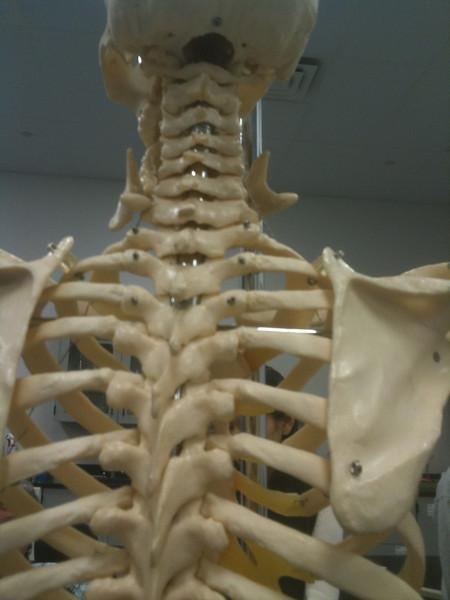 AnatandPhys Bones Fischer Williams Photo0079