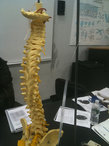 AnatandPhys Bones Fischer Williams Photo0065