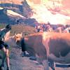 1960 60 Met de Eigergletsjer op de achtergrond