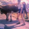 1960 55 Koeien op Kleine Scheidegg