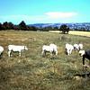 Kritisch gade geslagen door de koeien.