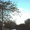 1967 05 Litchfield Way.