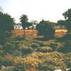 Bij Mzima Springs in het Tsavo NP.