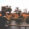 Nijlpaarden (hippo's) bij Mzima Springs