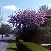Amsteldijk Noord - Voorjaar!