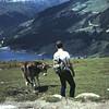 Stierenvechten in Tirol