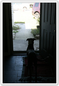 Dear Rachael - Please come home....Love, Milo!