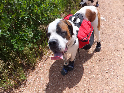 Angelina's 1st Backpacking Trip - June 2014
