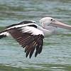 Pelican 1381