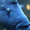 Fishy_6250