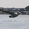 Pelican 1383
