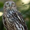 Owl 0093 (2)