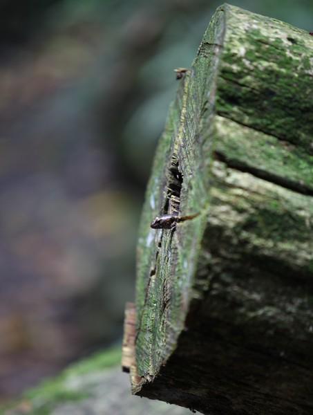 Skink in a log