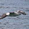 Pelican 1380