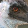EMU, Canberra Zoo