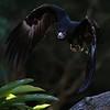 Hawk 0109 (2)