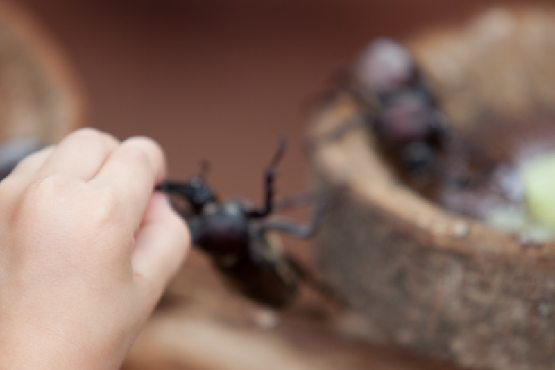 Bugs in Japan
