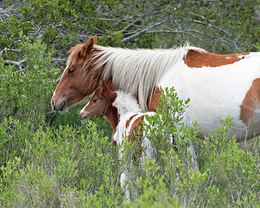 Painted Mare and Her Foal
