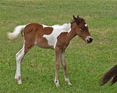 Foal Orphan